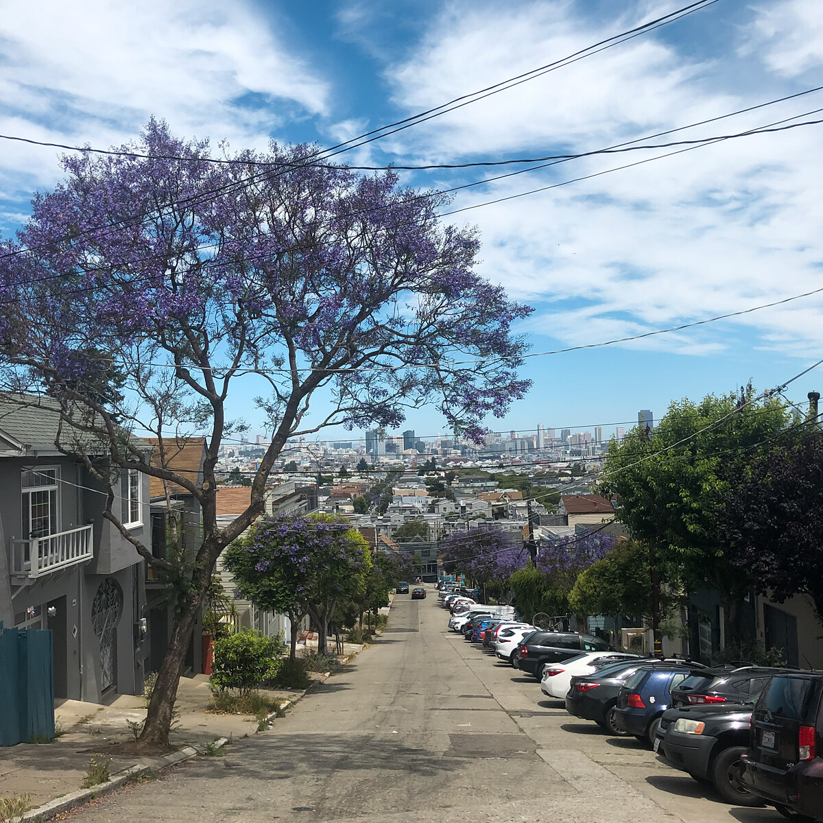 A large purple flowering jacaranda tree shades a hilly street in San Francisco. The city skyline fills the horizon below.