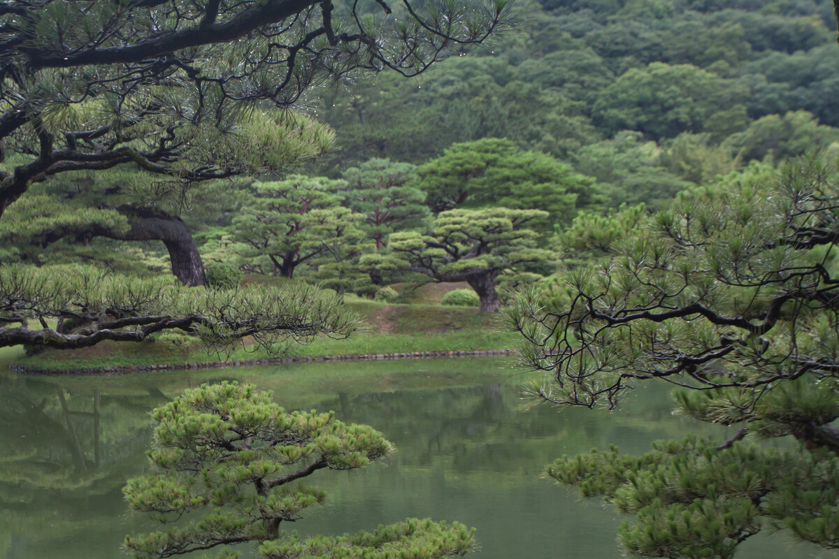 The garden is overwhelmingly green. In the foreground, drops of rain cling to pine needles. A river reflects the green hills and trees on the far bank.